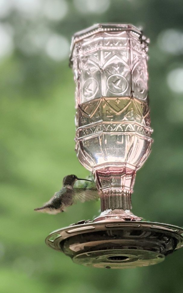 hummingbird landing at glass feeder with metal flower ports drinking sugar water made with all natural kitchen ingredients in an easy diy hummingbird feed recipe