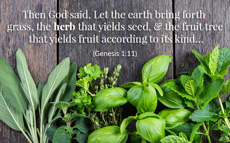 Bible Herbs: Genesis 1:11