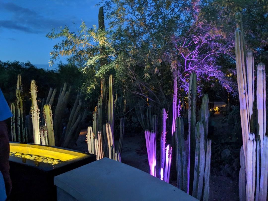 phoenix botanical garden electric desert