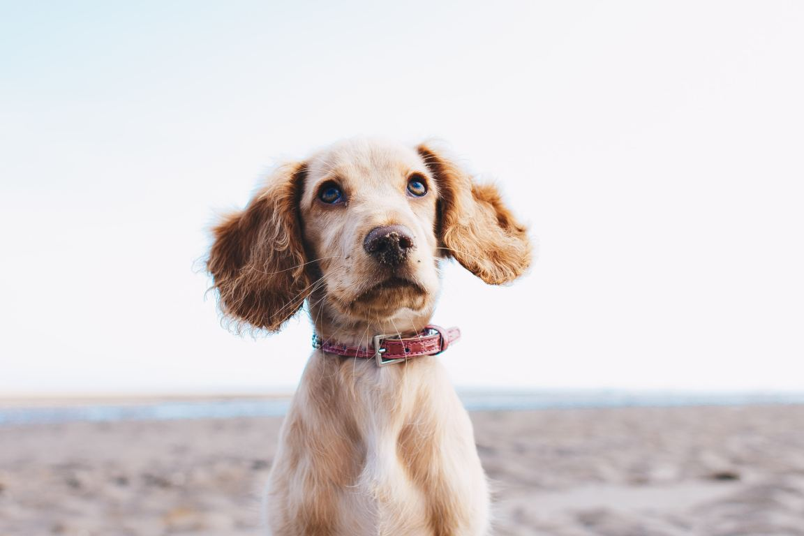 Dog Photography: Secrets About This Kind of Pet Photography