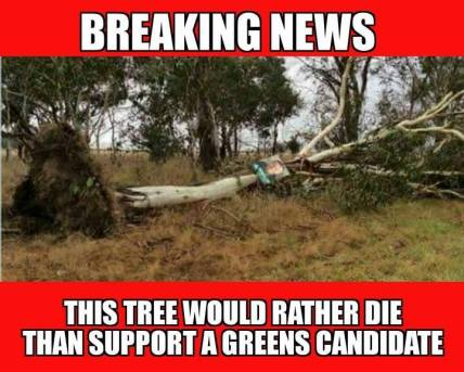 greens tree over
