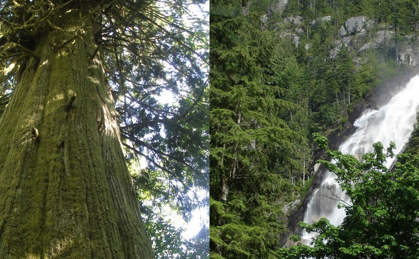Brackendale Forest and Shannon Falls