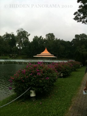 Walking and Trekking at MacRitchie Nature Trail and Reservoir