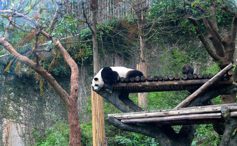 Life Of Others : Taipei Zoo – Giant Panda (Is it Tuan Tuan or Yuan Yuan?)