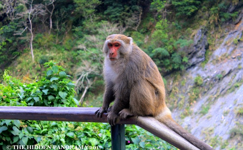 Life Of Others : Tien-Hsiang Monkey