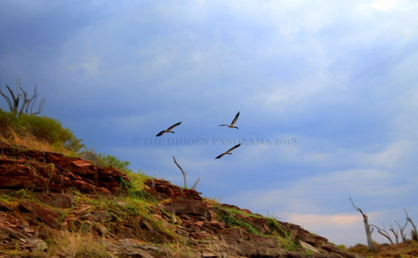 Life Of Others : Lake Argyle – Magpie Geese