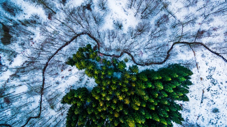 "1st Place Prize ""Kalbyris forest Denmark"""
