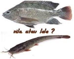 ternak ikan lele atau ikan nila