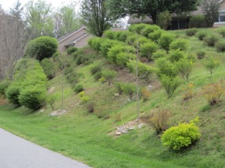 Green trees and bushes