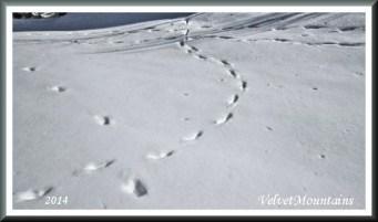 Wondering mystery Footprints
