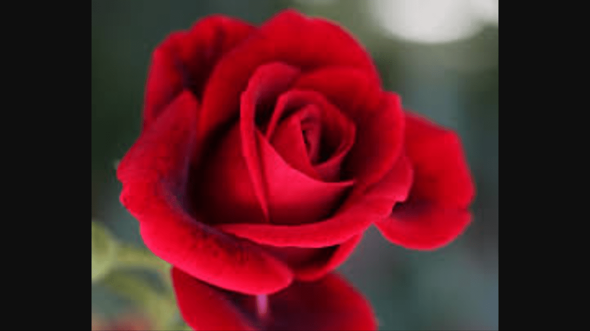 Red like the Rose Bowl?