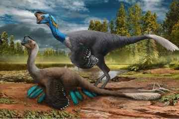 Dinosaur Fossil Cover
