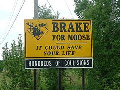 Moose {Photo: UnknownViper - Flickr}
