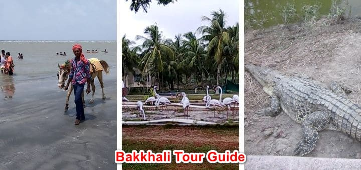 Bakkhali Tour Guide