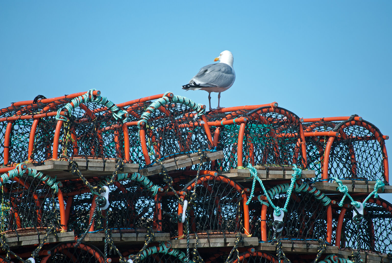 Stack of crab pots with a seagull perched on top