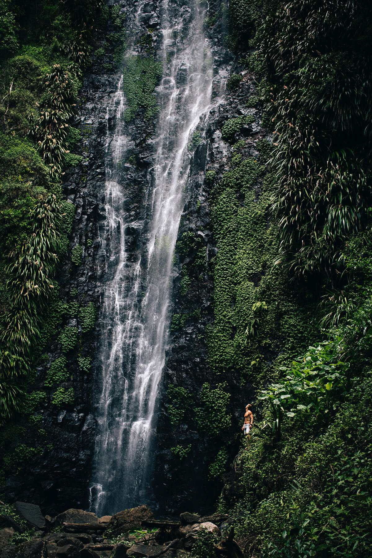 Waterfalls and rainforests in the National Parks of Queensland, Australia