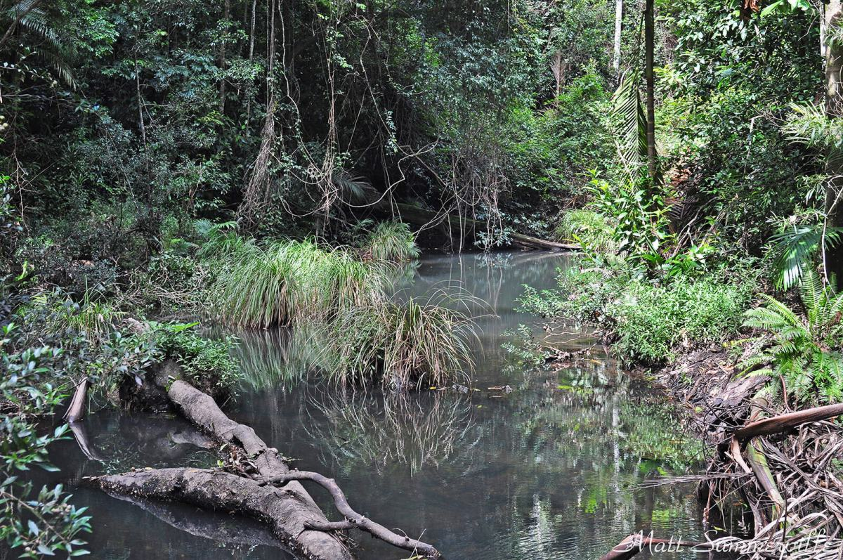 Conondale National Park in Queensland