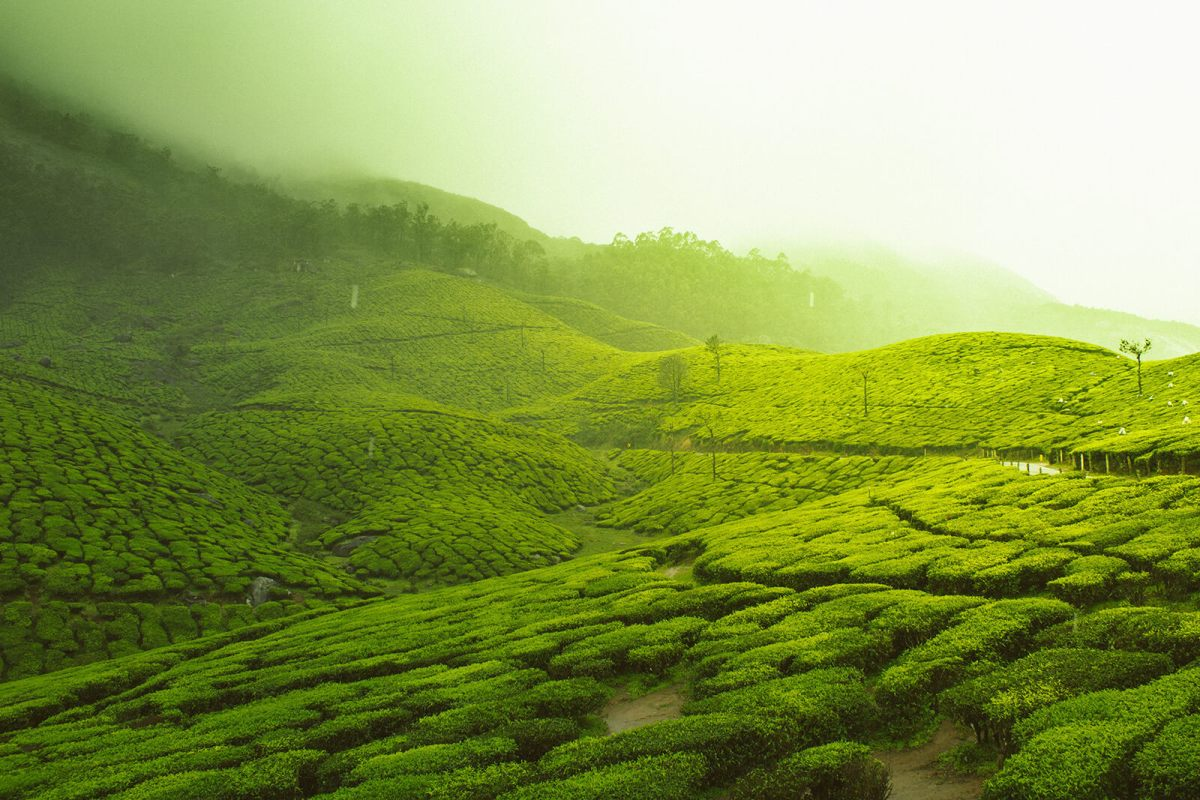 Kolukkumalai is the world's highest tea plantation and unique of the unique, offbeat India destinations