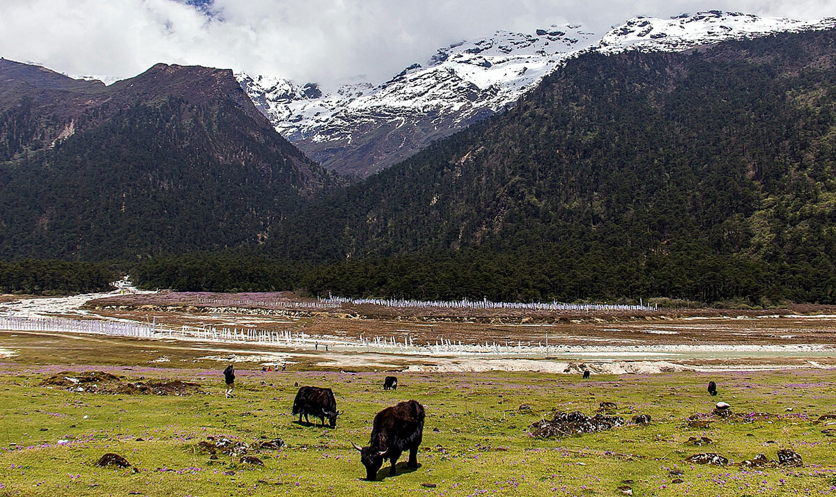 Yumthang, one of India's most incredible offbeat destinations