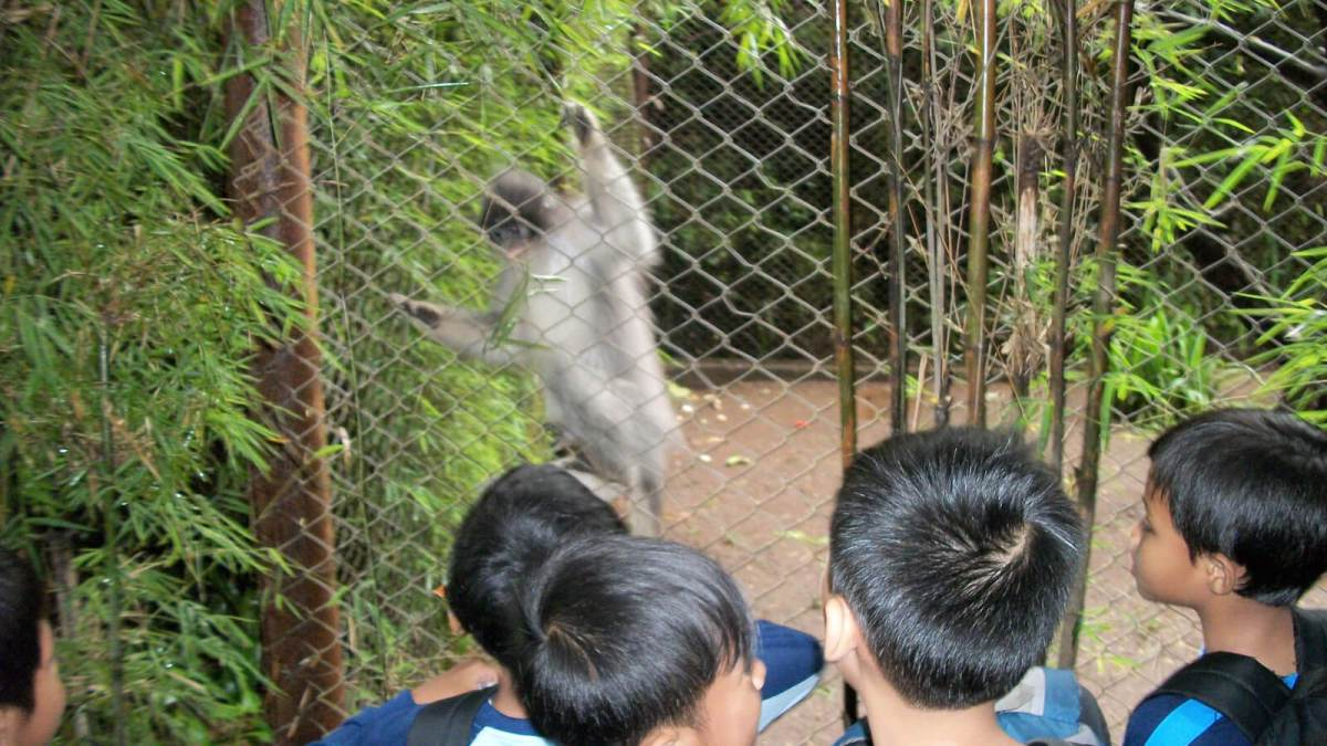 Starving animals beg for food at Kebun Binatang Bandung Zoo