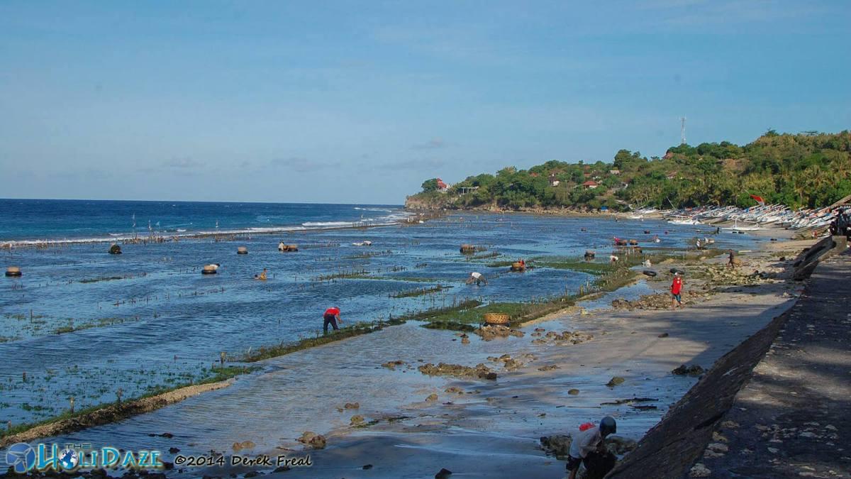 Seaweed farming on the north shore of Nusa Penida island, Bali's hidden paradise