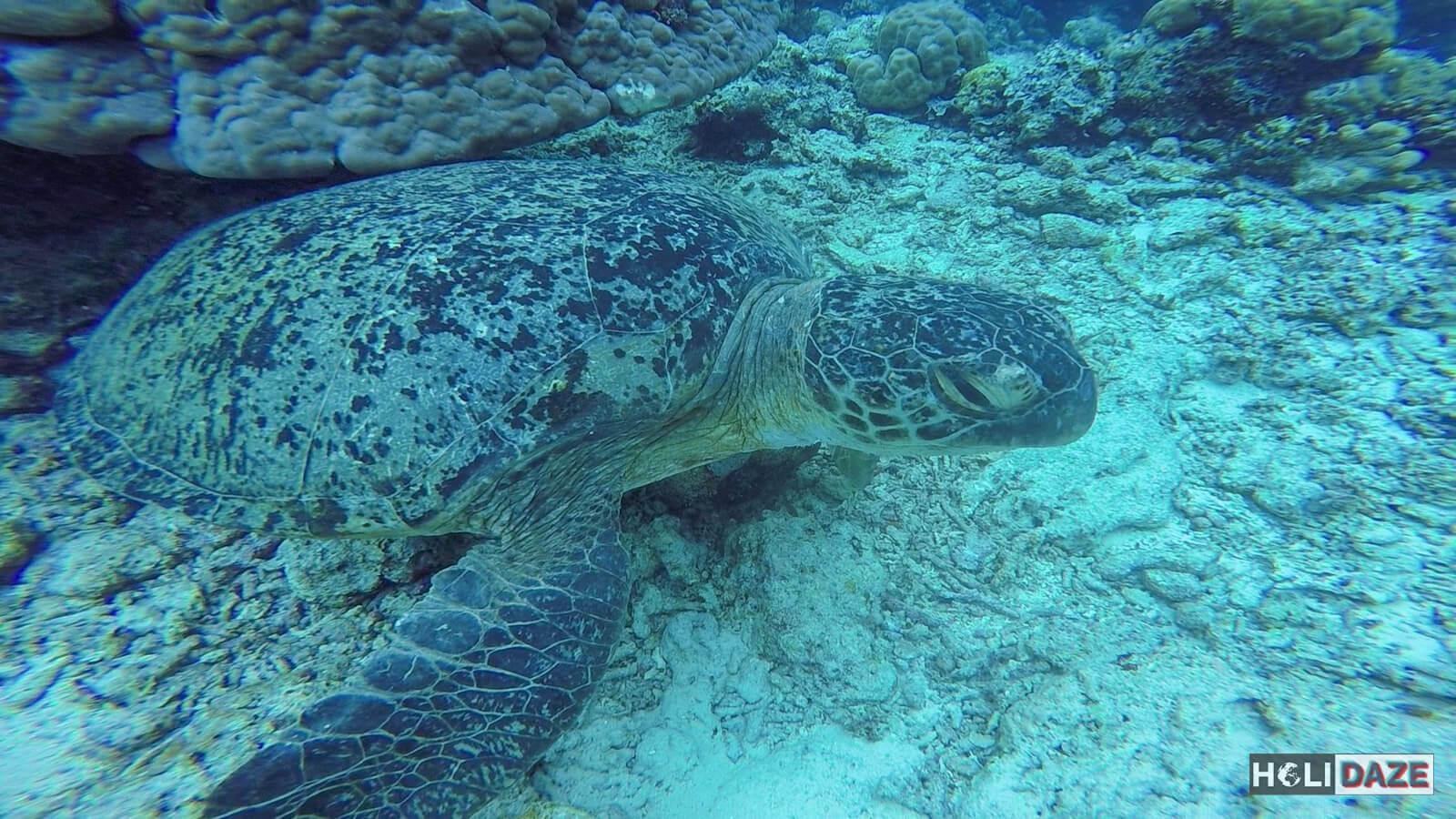 Mabul Island + Kapalai + Other Great Semporna Dive Spots (Besides Sipadan) The HoliDaze