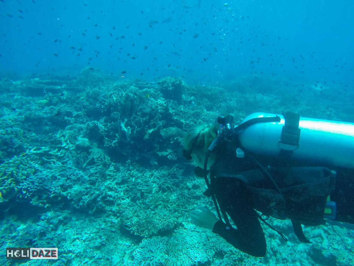 Sipadan Island is full of thousands of fish....scuba diving here is amazing!