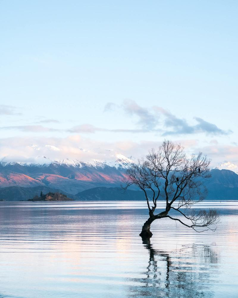 That Wanaka Tree at Lake Wanaka in New Zealand is iconic -- an example of the stunning scenery here, one of the top reasons to visit New Zealand