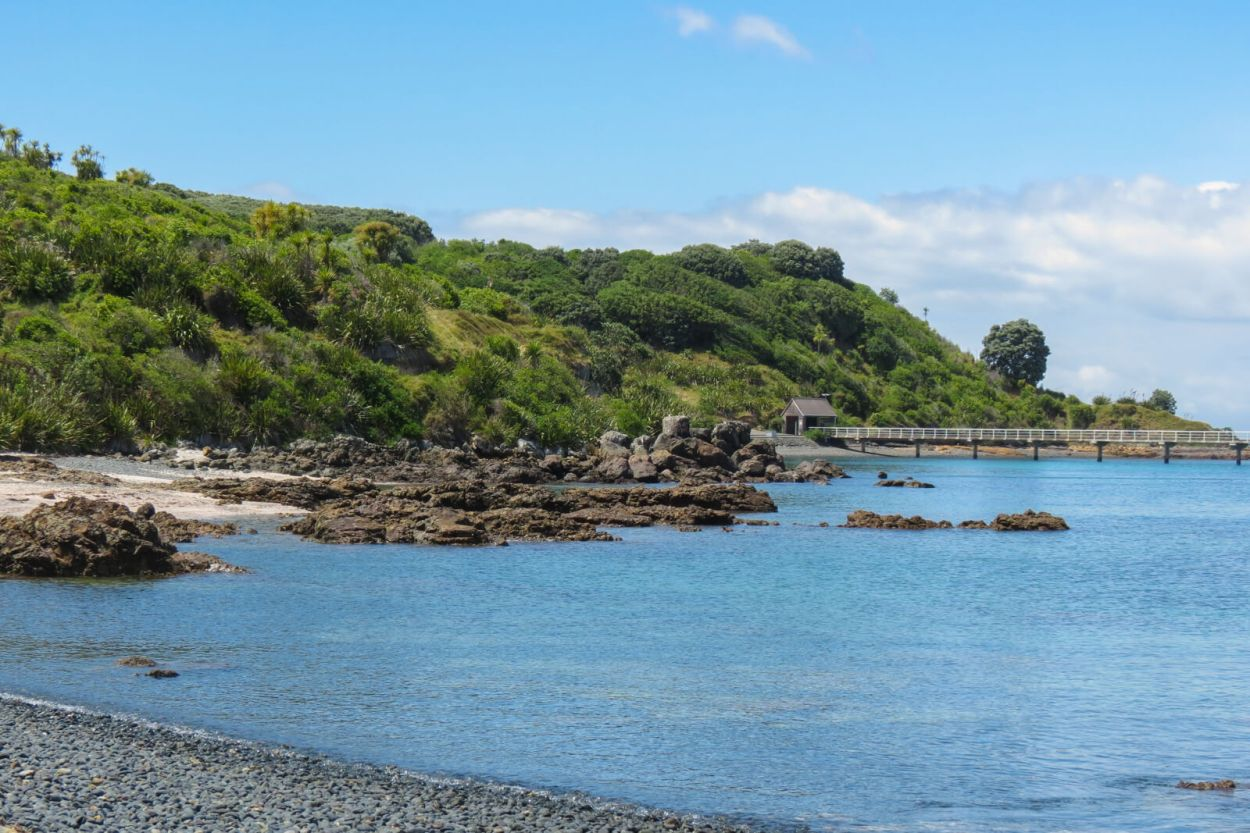 Tiritiri Matangi Island can be reached by ferry from Auckland Harbour