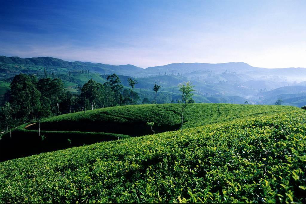 The highlands of Sri Lanka are home to massive tea fields and breathtaking views