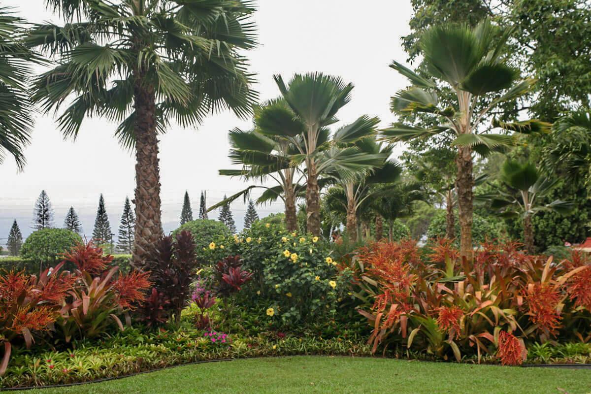 The Dole Pineapple Plantation on Oahu, Hawaii