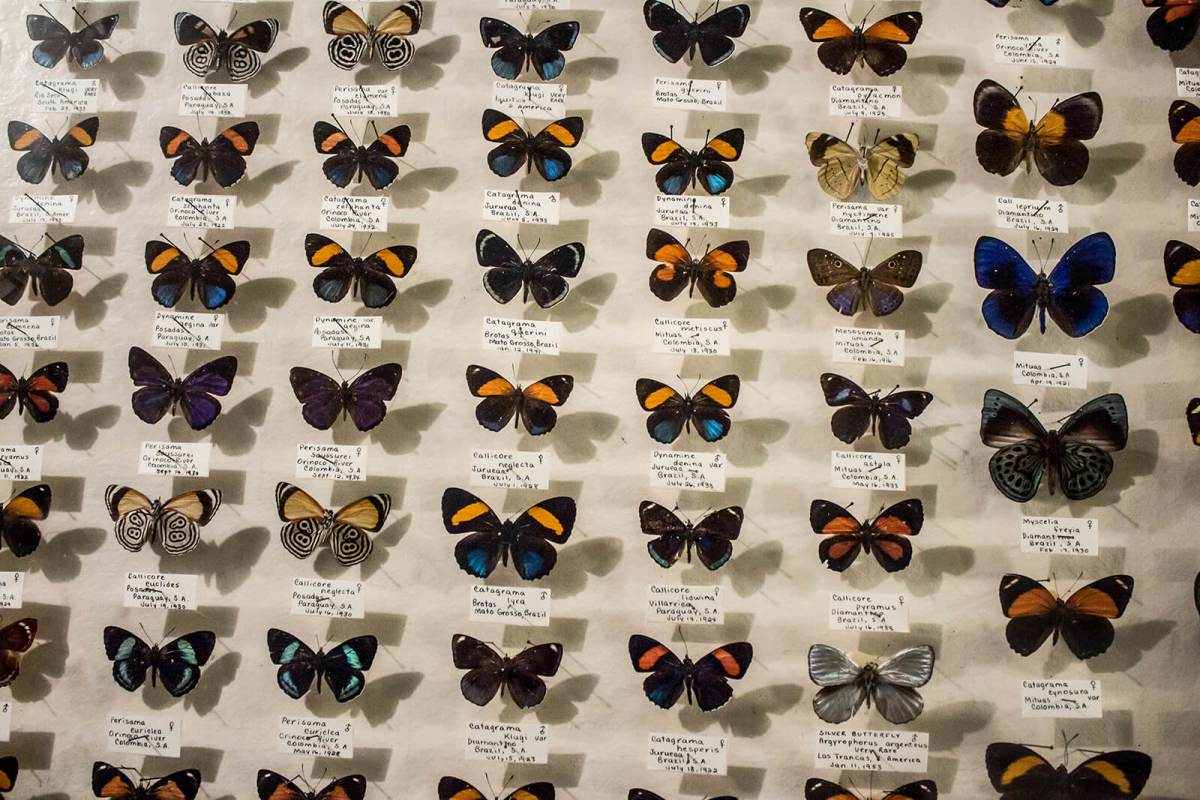 It's cool. It's creepy. It's one of the most wild overlooked and offbeat Colorado Springs activities. Check out the May Natural History Museum -- more bug than it is history!