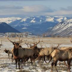 Field Dressing A Deer Diagram 2 Zone Valve Wiring Elk Feeding Station Diagrams Schemes