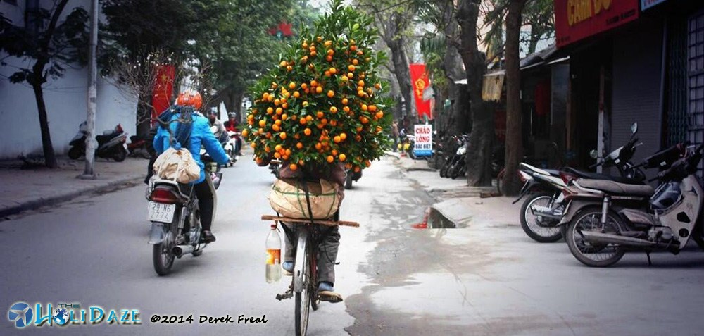 Kumquat delivery bike in Vietnam the week before Tet. Kumquat is one of the amazing, weird and exotic fruits of Southeast Asia