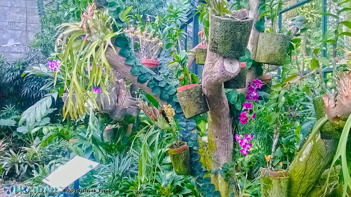 Rumah Anggrek Kebun Raya Bogor