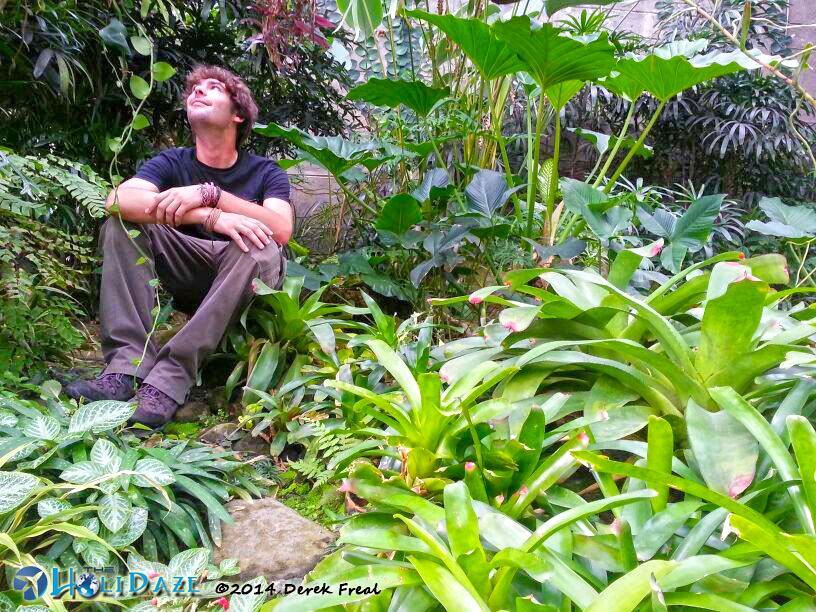 Frifotos: Solitude At Bogor Botanical Gardens, Indonesia