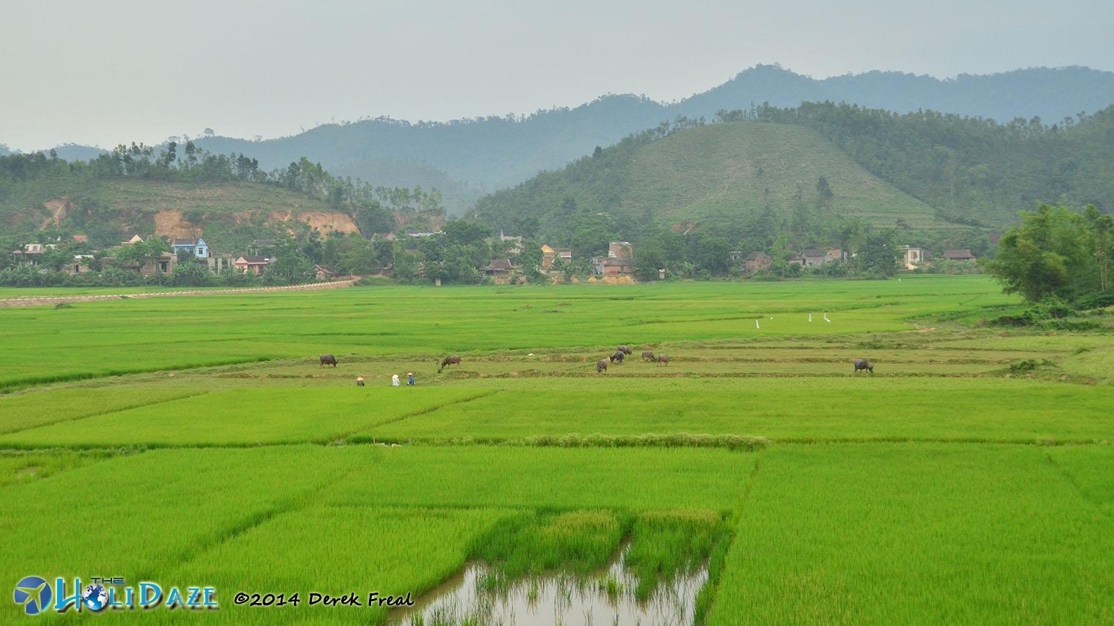 Rice paddies in Phong Nha, Vietnam