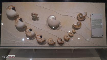 Collection of Mollusk shells at the Bangkok Seashell Museum in Thailand
