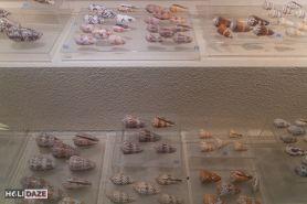 Thousands of seashells at Bangkok Seashell Museum in Thailand