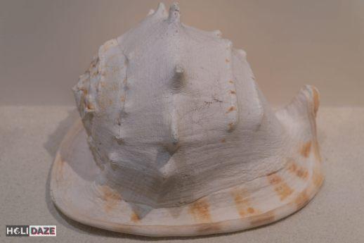 Bangkok Seashell Museum