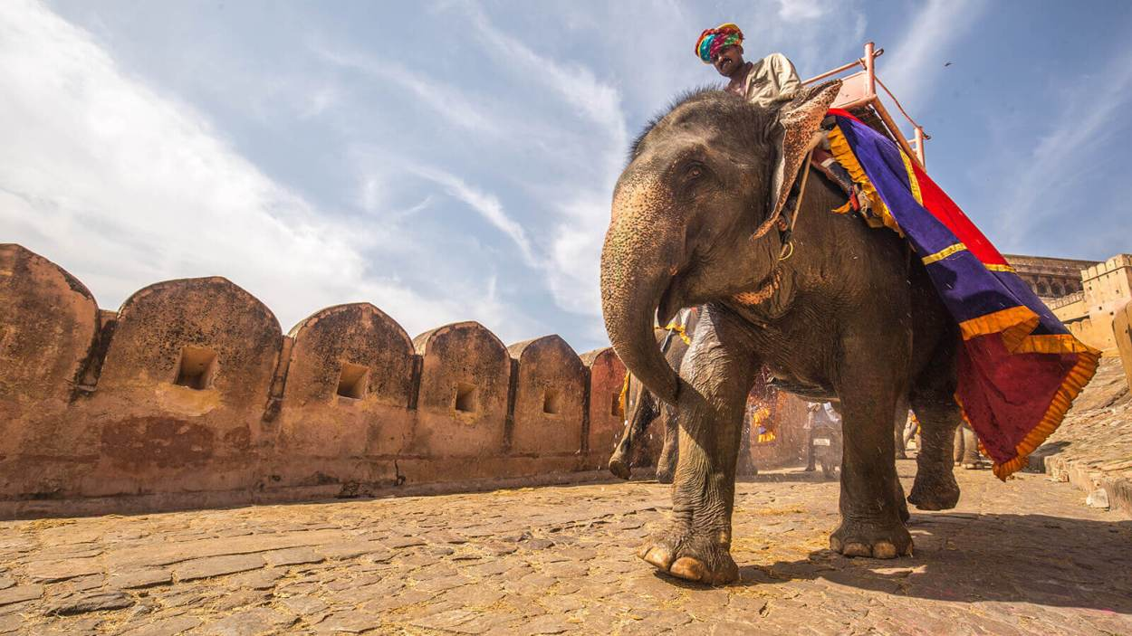 Elephant ride entrance to the Amber Fort in Jaipur, India, a UNESCO World Heritage Site and one of the most royal Rajasthan destinations