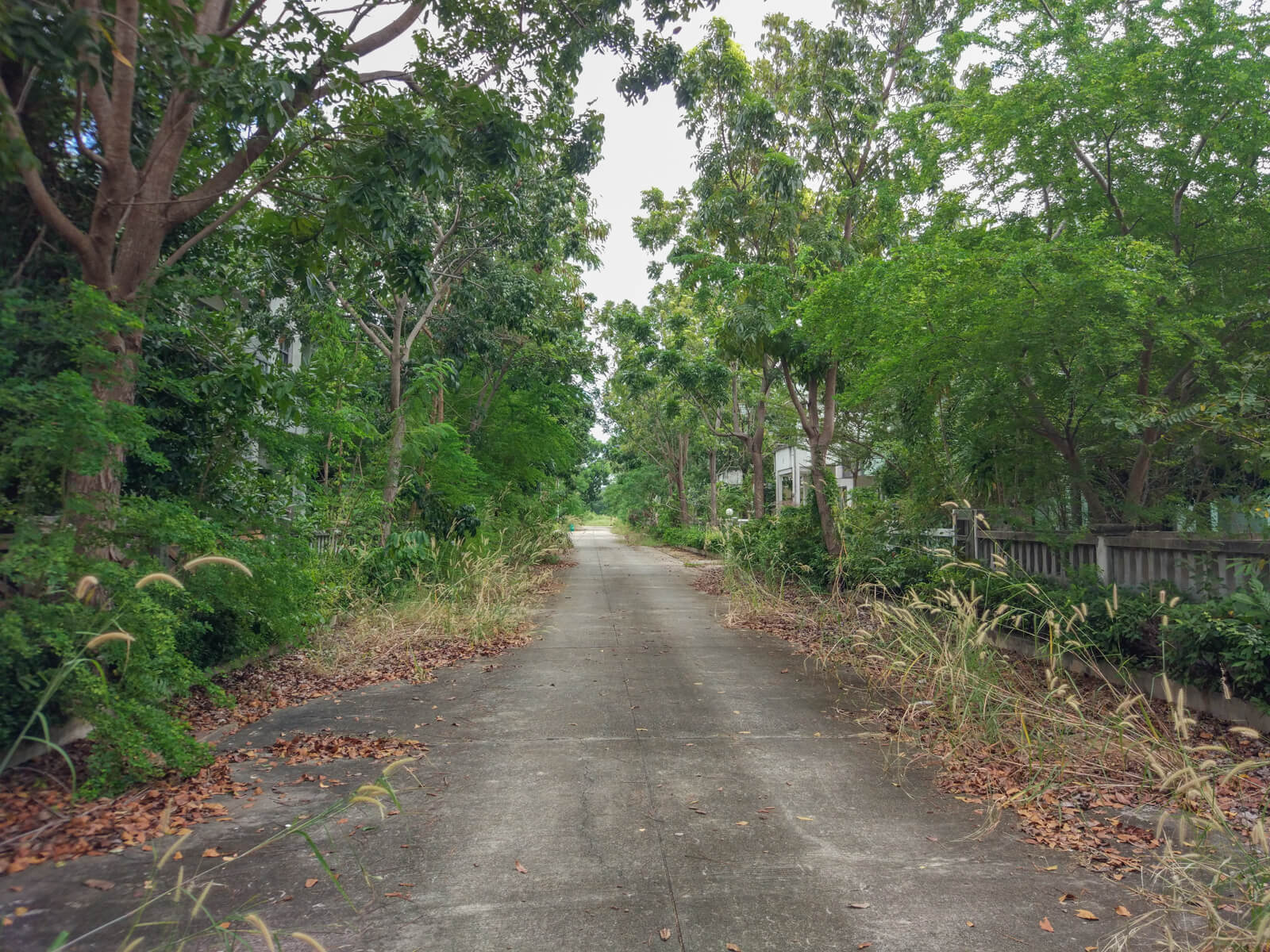 Overgrown road in Pricha Village in Rayong, Thailand