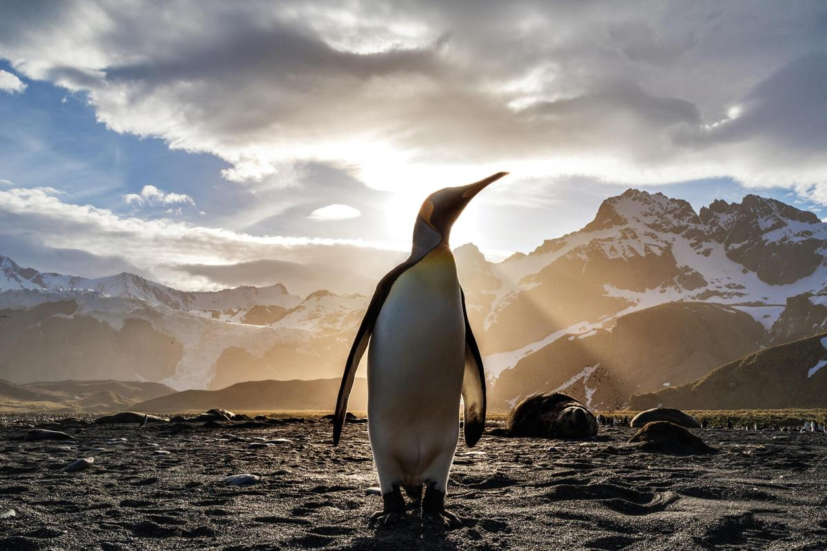 My favorite obscure travel fact is in Antarctica almost 3% of the ice is made up of penguin urine