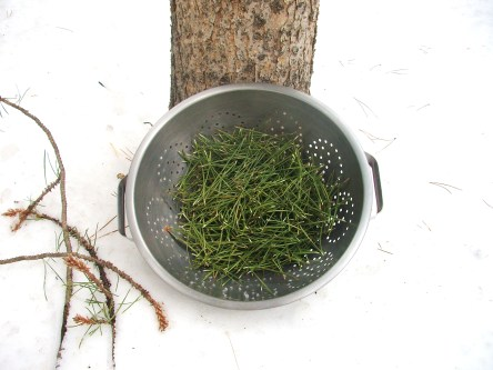 I wash my pine needles with fresh snow and give them a good shake