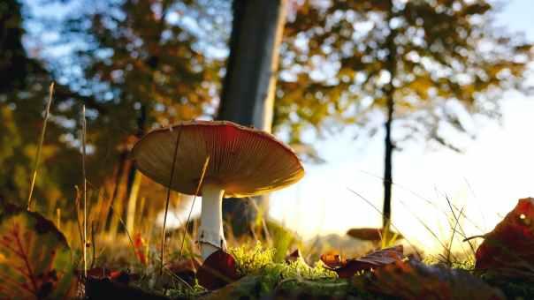 close up of mushroom growing on field