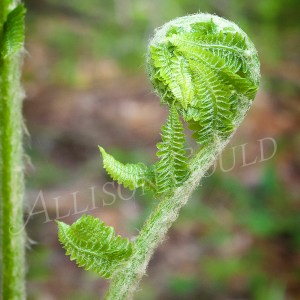Blooming Fern Wall Decor