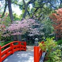 """""""Lost LA: Descanso Gardens"""""""