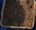 seedline soil to start seeds at home