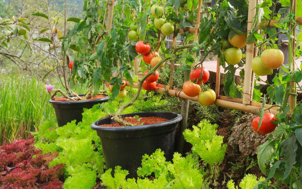 How-to-start-square-foot-garden