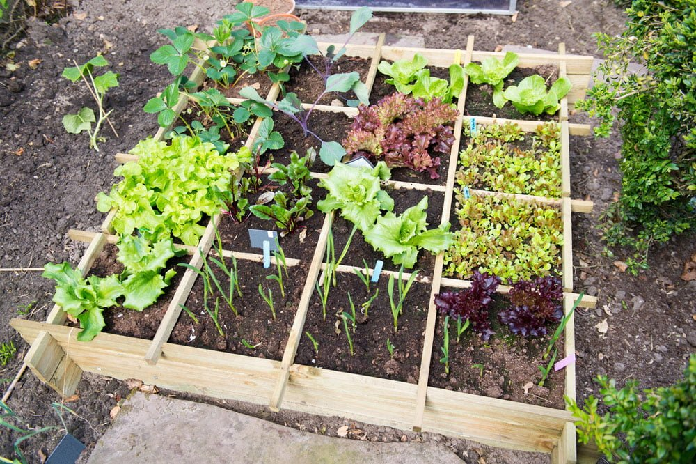 Tips-on-planting-a-vegetable-garden